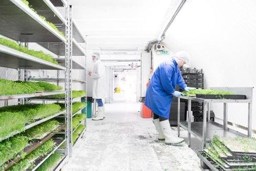 At work in Growing Underground