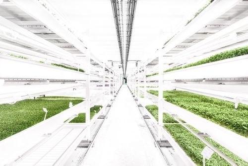 Growing Underground